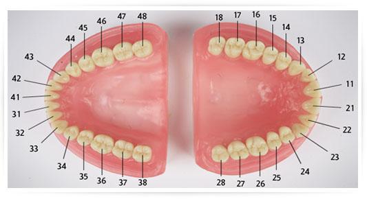 Muito Materiais Dentários - Top - Prodens RP11